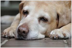 犬の睡眠時間